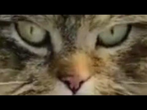 Деревенские кошки Пушинка и Чернуха забавные животные 🥰 Village cats funny animals