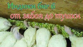 ИНДЮКИ БИГ 6# ЗАБОЙ, ОЩИП, ПОТРОШЕНИЕ БОЛЬШОГО ИНДЮКА!!!!