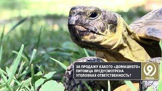 За продажу одного из видов черепах грозит большой штраф. «9 телеканал» Рязань