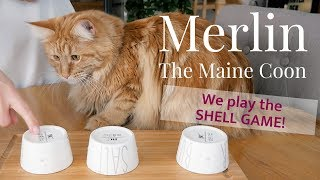 Merlin the Maine Coon and Mina - WE PLAY THE SHELL GAME!