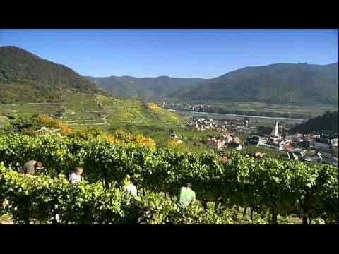 wine article Wachau Wine Region Feature