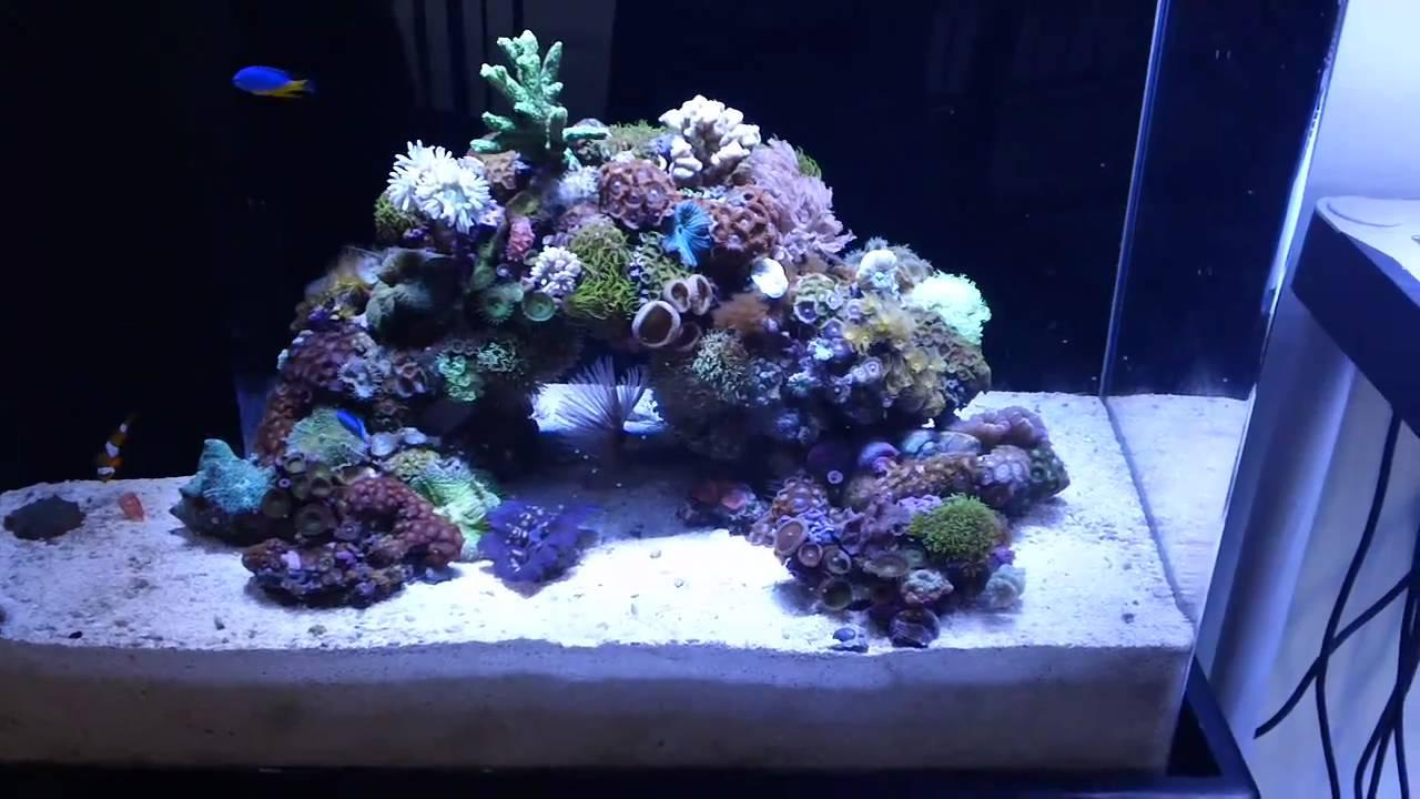 25 High Custom Acrylic Bonsai Reef Youtube