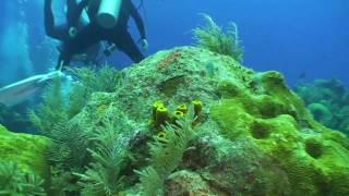 SVI - Promotional Video for Oceanic Defense