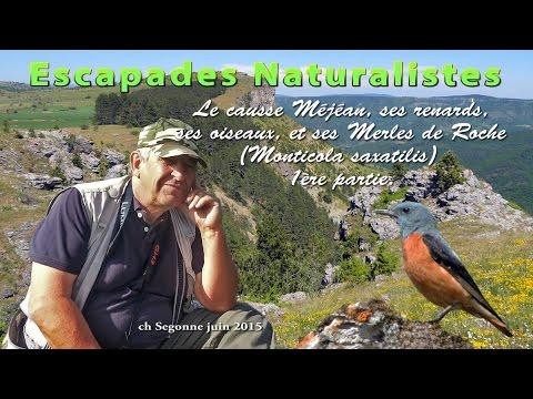 Escapade Naturaliste sur le causse Méjéan