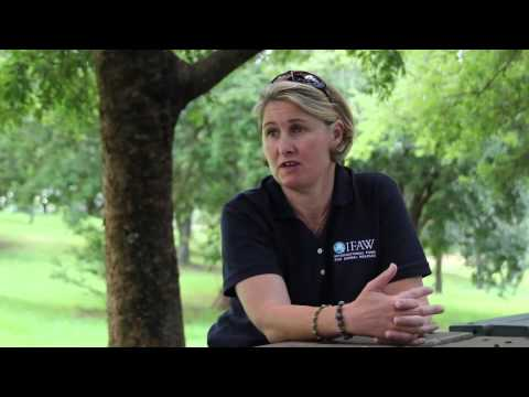 IFAW - World Wildlife Day 2015