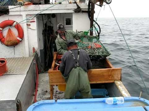whelk fishing 2010