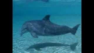 Одни из самых красивых животных Дельфины