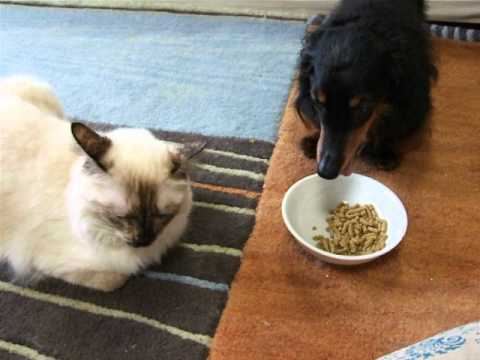 【楽天市場】犬・猫・ペット用 手作りご飯(食べる  …