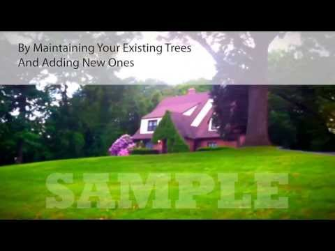 Promotional Video for Tree Service Specialists in Pittsburgh Pa