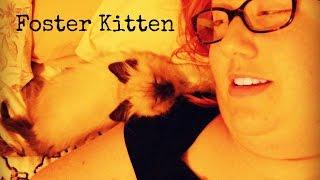 Foster Kitten (Mister Wonton)