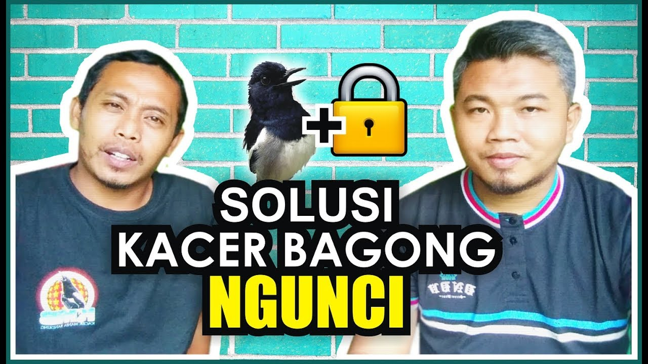 Cara Mengatasi Kacer Mbagong Ngunci Youtube