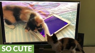 Kitten watches herself playing with tablet on TV