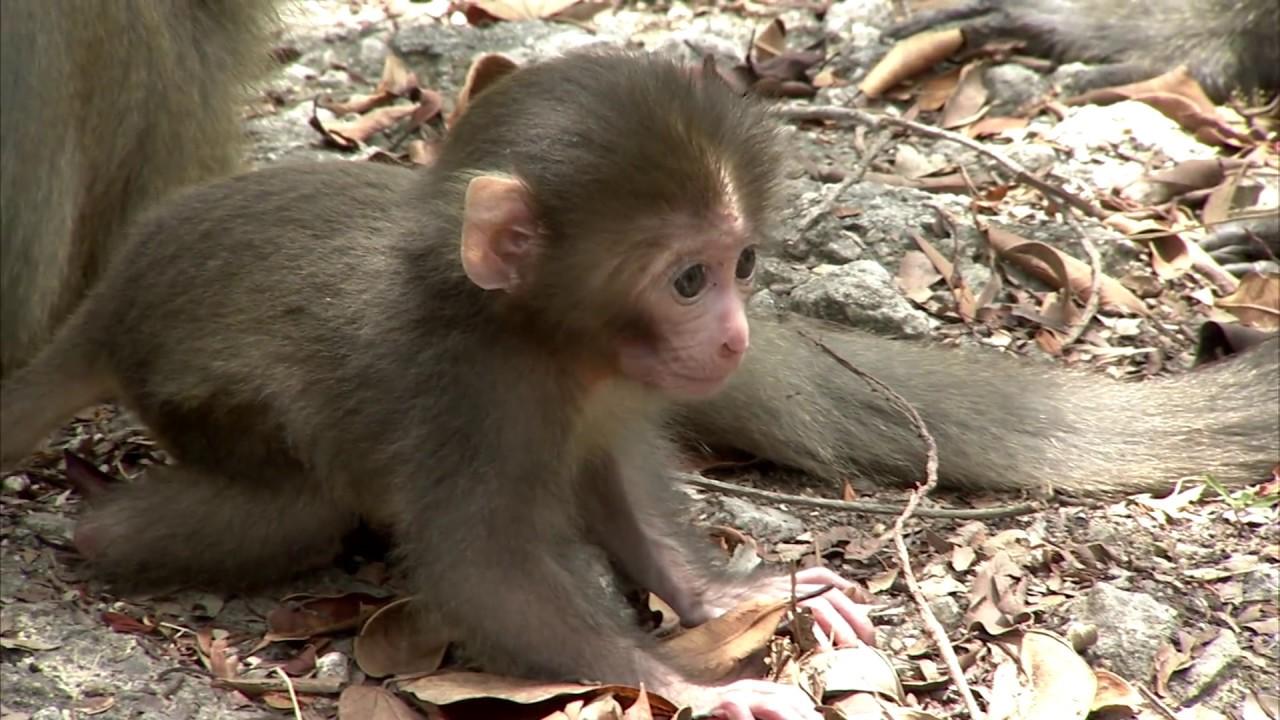 小猴被打 - YouTube
