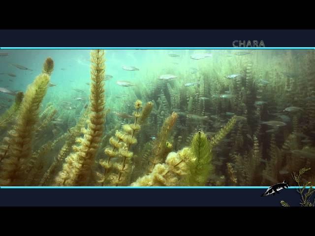 CHARA3. Vídeo de José Antonio Valverde (buzo) sobre las Lagunas de Ruidera