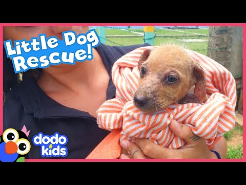 Lonely Puppy Asks For Help And Now She Has The Biggest Family   Rescued!   Dodo Kids
