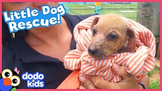 Lonely Puppy Asks For Help And Now She Has The Biggest Family | Rescued! | Dodo Kids