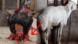 5 UNNATURAL Animals We BRED Into Existence