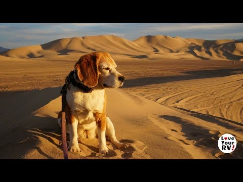 A Great Beagle Life - Memorial to Angie