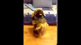 Smart dog, good boy/Собака - настоящий пёс