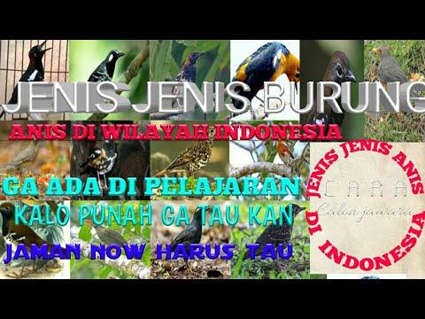 14JENIS ANIS DI INDONESIA || GENEUS TARDUS /ZOOTHERA