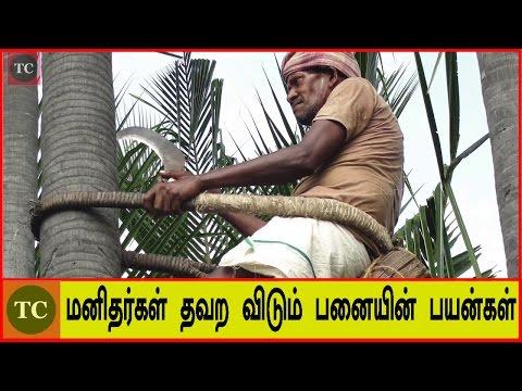 மனிதர்கள் தவற விடும் பனையின் வியக்க வைக்கும் பயன்கள் | Amazing Benefits of Palm Tree in Tamil