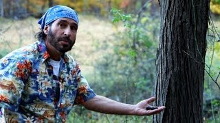 How to Forage for Edible Nuts | Survival Skills