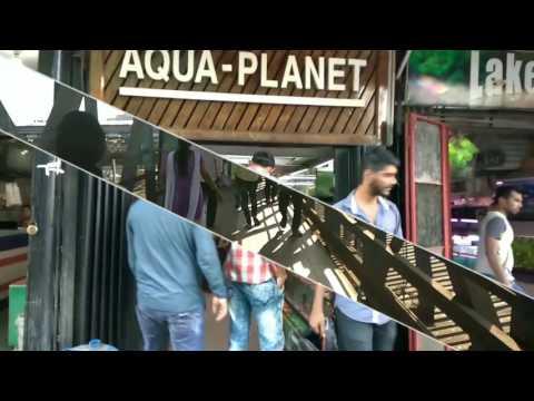 Fish Market For Aquarium Cheap Price Kurla Mumbai