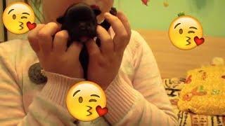 Новорожденные ЩЕНКИ и КРАСАВИЦА МАМА / french bulldog