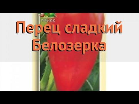 Перец сладкий Белозерка (belozerka belozerka) 🌿 Белозерка обзор: как сажать, семена перца Белозерка | белозерка | сладкий | перец | обзор | belozerka | б