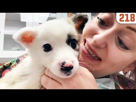 Yavru Köpeği Titreşime Almışlar 😆 GIK DEMEYEN KÖPEK!!!- Sesini duyamadık 😍 @DoBiDa 218
