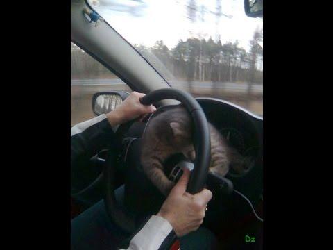 Видео Игры симуляторы вождение играть онлайн бесплатно