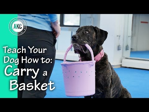 Teach Your Dog How to Carry a Basket – AKC Trick Dog