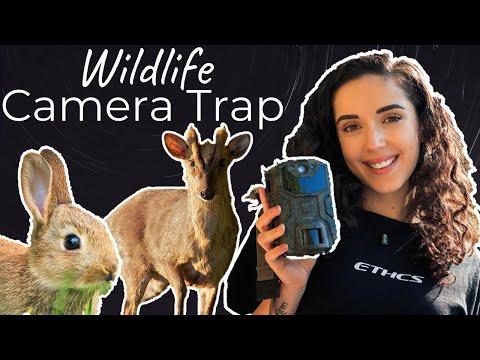 Camera Trap for Wildlife UK: cheap Amazon trail camera!