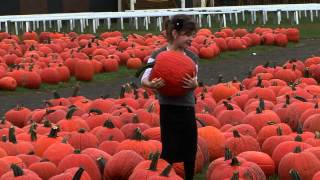 Pumpkin farms long island - visit the fall farm festival in the Long Island pumpkin farm