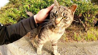 キジトラ猫が「帰らないで!」と猛ダッシュで追いかけてきた