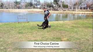 Advanced Dog Obedience Training In Haverhill, Ma
