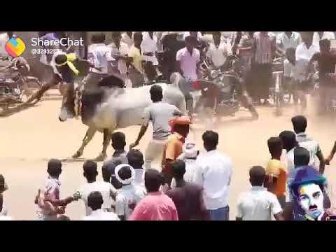 Mass Tamilan Jallikattu(3)