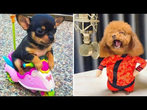 Baby Dogs ? Cute and Funny Dog Videos Compilation #3 | Funny Puppy Videos 2020