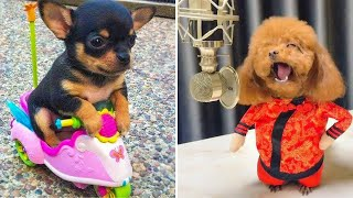 Baby Dogs  Cute and Funny Dog Videos Compilation #3 | Funny Puppy Videos 2020