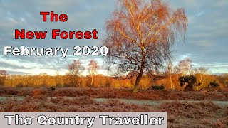 The New Forest in February 2020