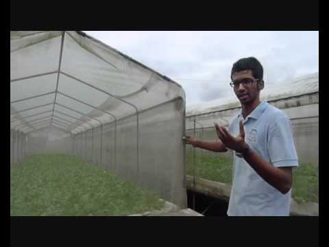 Oh Chin Huat Hydroponic Farm tour