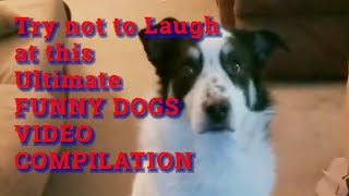 Try not to laugh at these silly dogs || Funny Videos