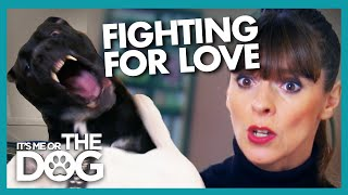 Dogs Explosively Fight Over Their Owner's Love | It's Me or The Dog