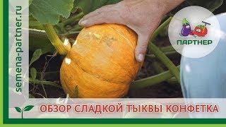 Обзор сладкой тыквы Конфетка