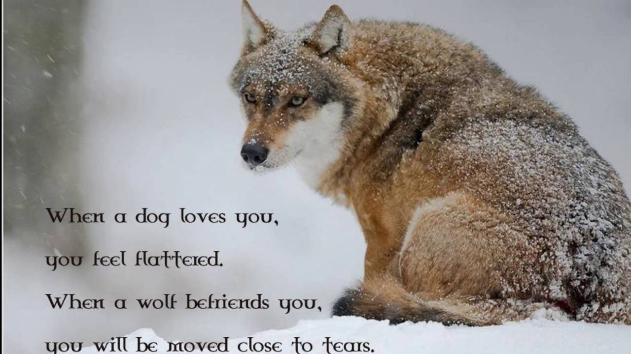 Cute Wolf Quotes