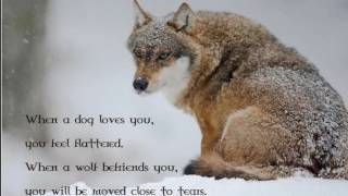wolf quotes cute hi