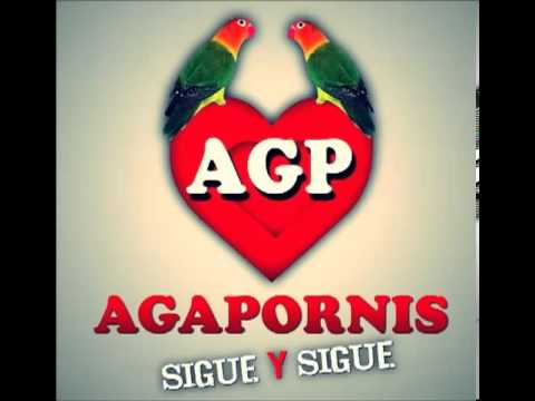 #Agapornis- You are still the one.