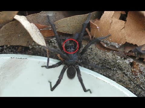 14 DEADLIEST SPIDER BITES