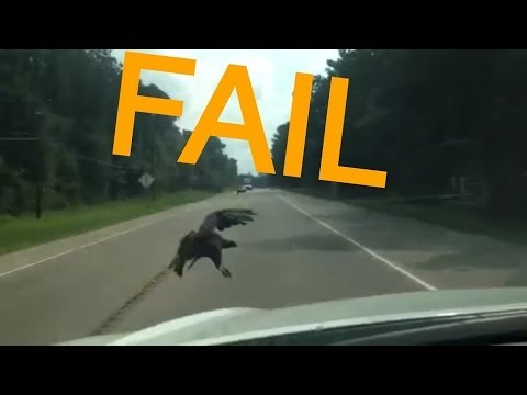 Roadkill Buzzard Vulture Bird Strike Caught On Camera Hits Vehicle