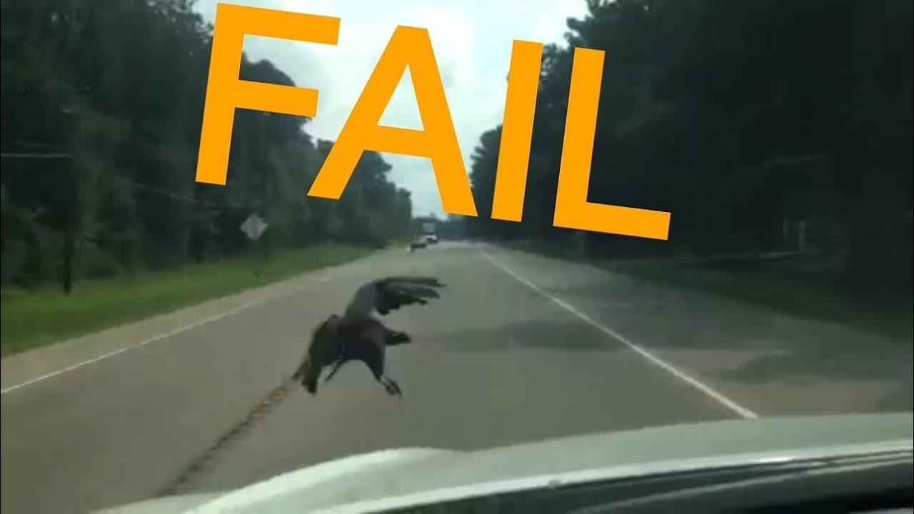 Roadkill Buzzard Vulture Bird Strike Caught On Camera Hits